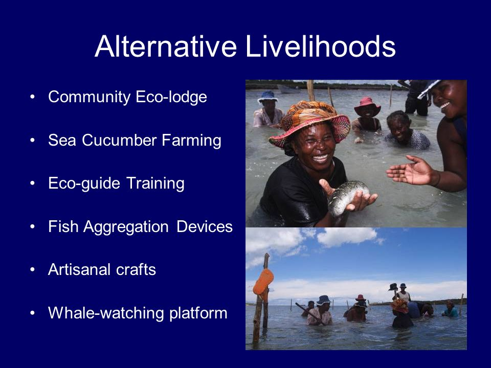 Alternative Livelihoods Community Eco-lodge Sea Cucumber Farming Eco-guide Training Fish Aggregation Devices Artisanal crafts Whale-watching platform