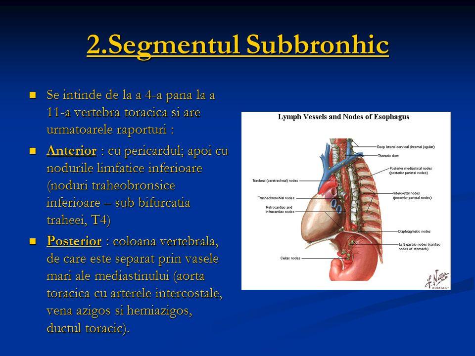 2.Segmentul Subbronhic Se intinde de la a 4-a pana la a 11-a vertebra toracica si are urmatoarele raporturi : Se intinde de la a 4-a pana la a 11-a ve