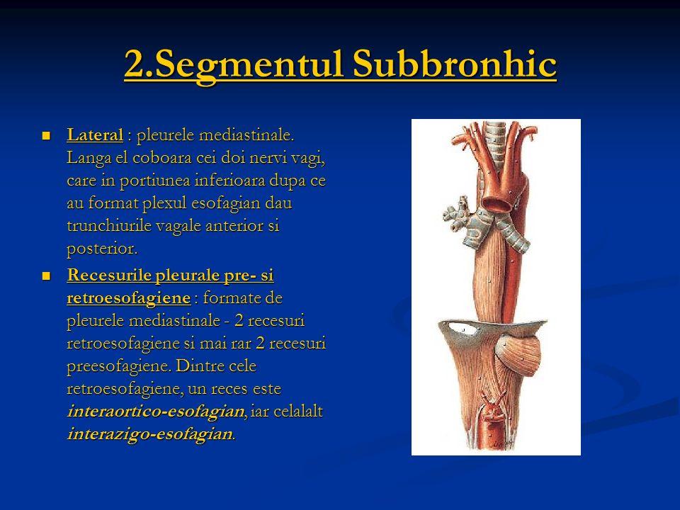 2.Segmentul Subbronhic Lateral : pleurele mediastinale. Langa el coboara cei doi nervi vagi, care in portiunea inferioara dupa ce au format plexul eso