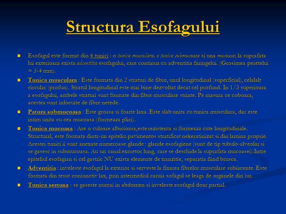 Structura Esofagului Esofagul este format din 4 tunici : o tunica musculara, o tunica submucoasa si una mucoasa; la suprafata lui exterioara exista ad