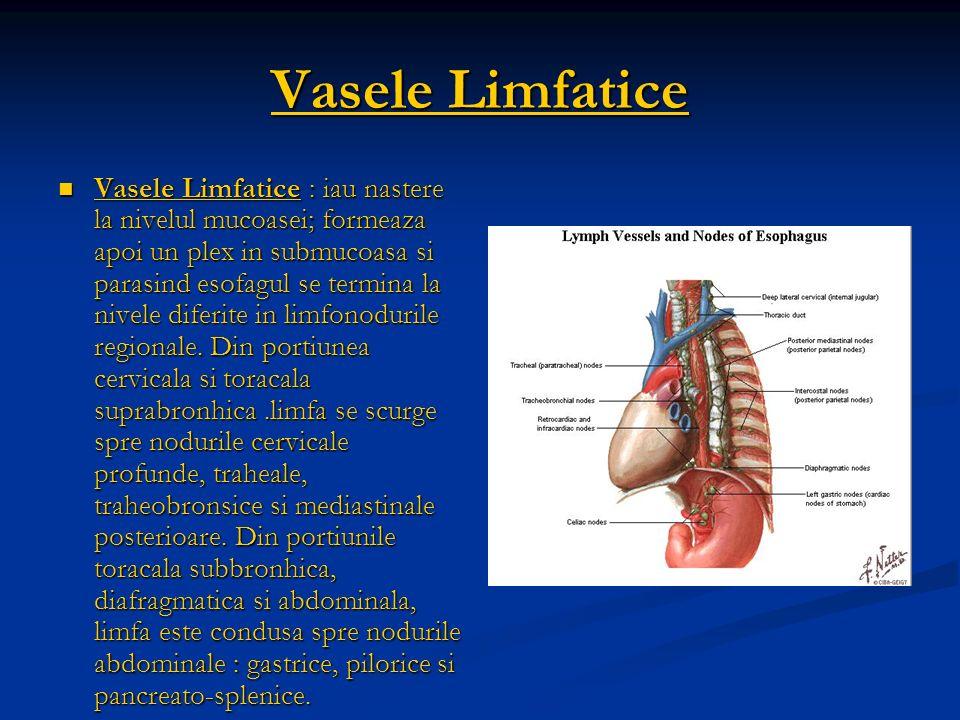 Vasele Limfatice Vasele Limfatice : iau nastere la nivelul mucoasei; formeaza apoi un plex in submucoasa si parasind esofagul se termina la nivele dif