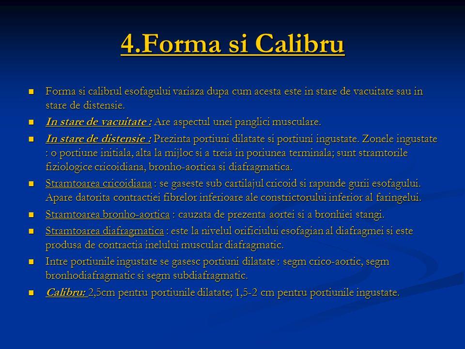 4.Forma si Calibru Forma si calibrul esofagului variaza dupa cum acesta este in stare de vacuitate sau in stare de distensie. Forma si calibrul esofag