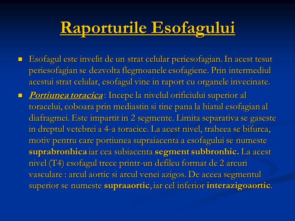 Raporturile Esofagului Esofagul este invelit de un strat celular periesofagian. In acest tesut periesofagian se dezvolta flegmoanele esofagiene. Prin