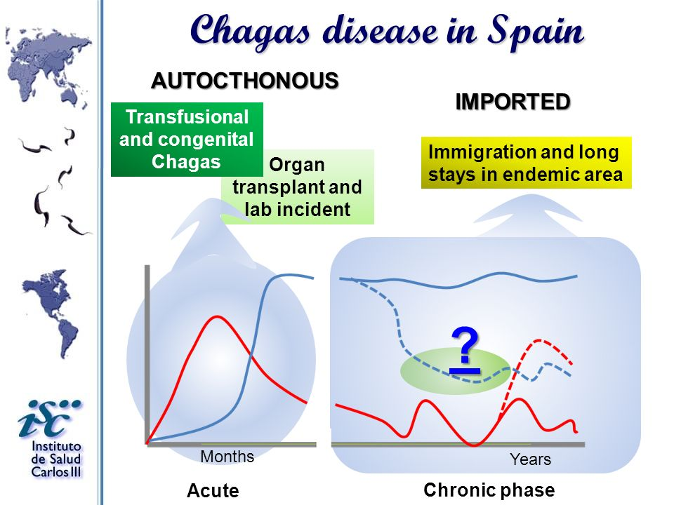 Organ transplant and lab incident Months Years Transfusional and congenital Chagas Acute Chronic phase Immigration and long stays in endemic area Chag