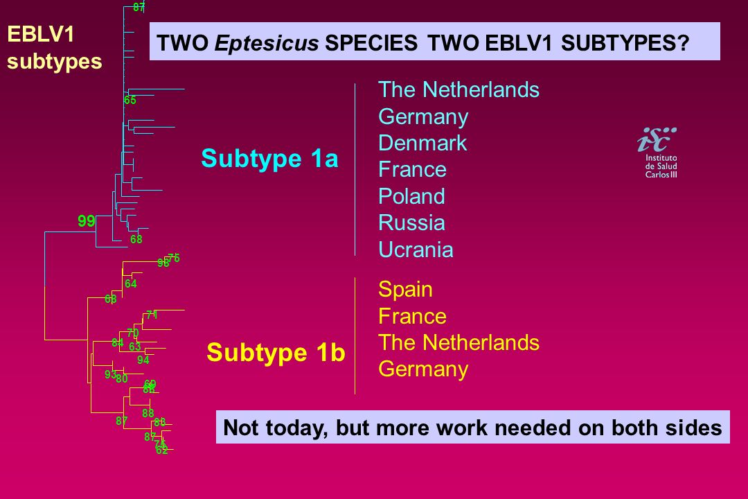 TWO Eptesicus SPECIES TWO EBLV1 SUBTYPES? Subtype 1a Subtype 1b The Netherlands Germany Denmark France Poland Russia Ucrania Spain France The Netherla