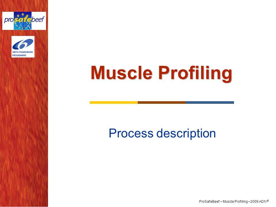 ProSafeBeef – Muscle Profiling –2009 ADIV © Muscle Profiling Process description