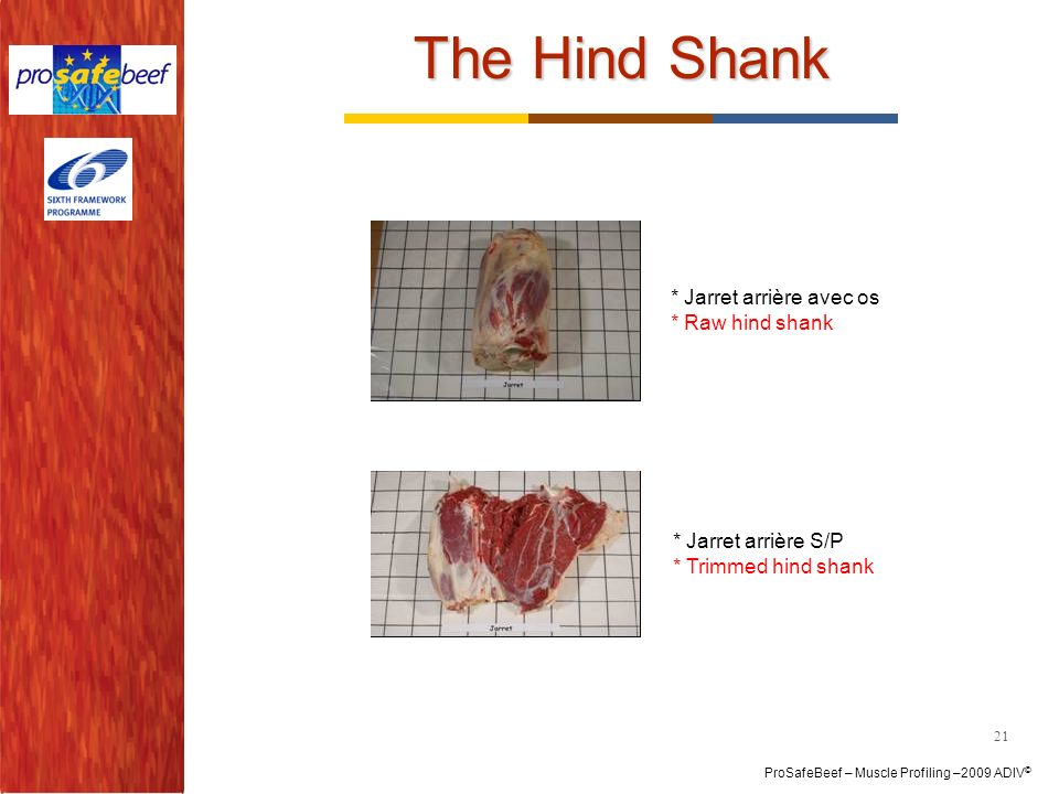 ProSafeBeef – Muscle Profiling –2009 ADIV © The Hind Shank 21 * Jarret arrière avec os * Raw hind shank * Jarret arrière S/P * Trimmed hind shank