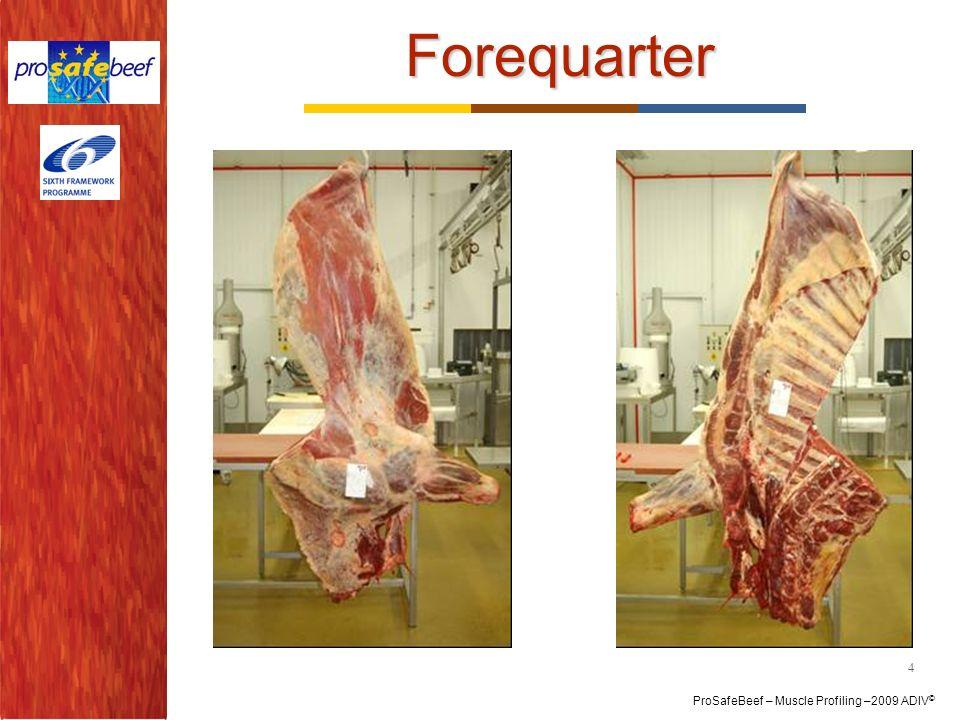 ProSafeBeef – Muscle Profiling –2009 ADIV © Forequarter 4