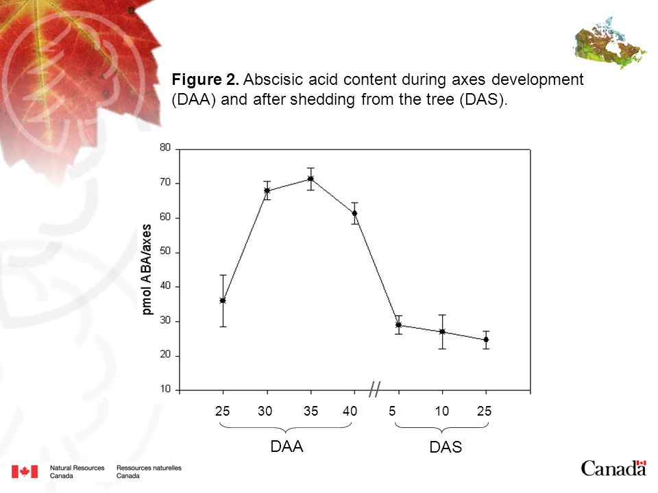 DAA DAS 25 30 35 40 5 10 25 Figure 2. Abscisic acid content during axes development (DAA) and after shedding from the tree (DAS). //