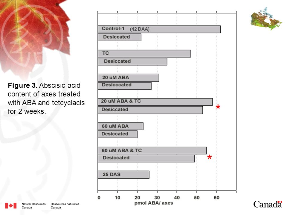 Figure 3. Abscisic acid content of axes treated with ABA and tetcyclacis for 2 weeks. * * ( 42 DAA)
