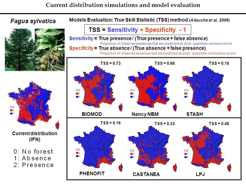 Current distribution simulations and model evaluation Fagus sylvatica Current distribution (IFN) BIOMODNancy NBMSTASH TSS = 0.73 TSS = 0.66TSS = 0.18