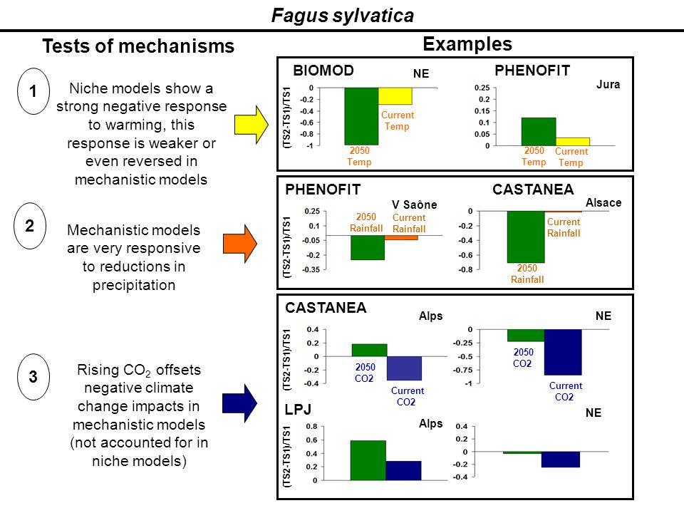 Fagus sylvatica Tests of mechanisms 1 2 3 (TS2-TS1)/TS1 AlpsNE CASTANEA LPJ Current CO2 (TS2-TS1)/TS1 Alps NE PHENOFIT (TS2-TS1)/TS1 Current Rainfall