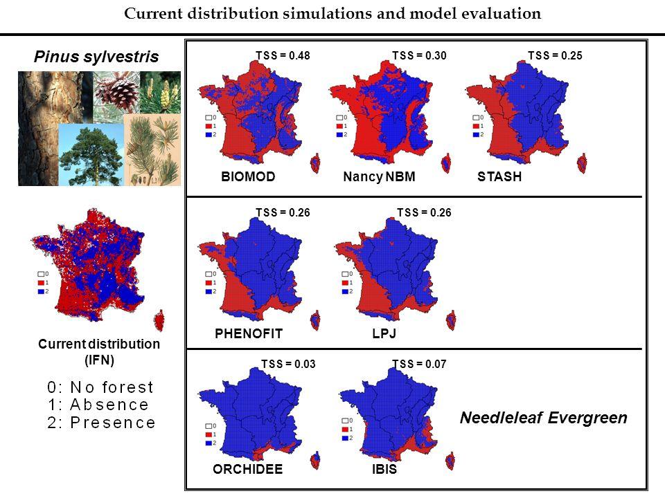 Current distribution simulations and model evaluation Pinus sylvestris Current distribution (IFN) BIOMODNancy NBM TSS = 0.48TSS = 0.25 STASH PHENOFITL