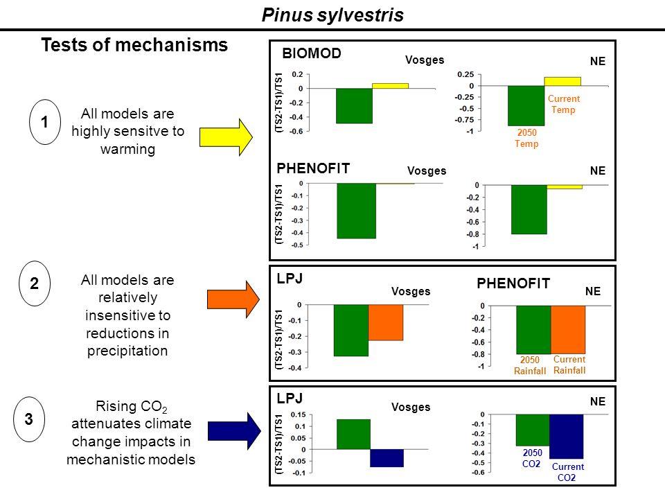 Pinus sylvestris 1 2 3 LPJ BIOMOD (TS2-TS1)/TS1 Vosges (TS2-TS1)/TS1 PHENOFIT Vosges NE T°C TS1 NE PHENOFIT LPJ (TS2-TS1)/TS1 Vosges (TS2-TS1)/TS1 NE
