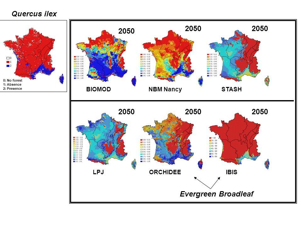 Quercus ilex 0: No forest 1: Absence 2: Presence BIOMOD 2050 NBM NancySTASH 2050 LPJ 2050 ORCHIDEEIBIS 2050 Evergreen Broadleaf