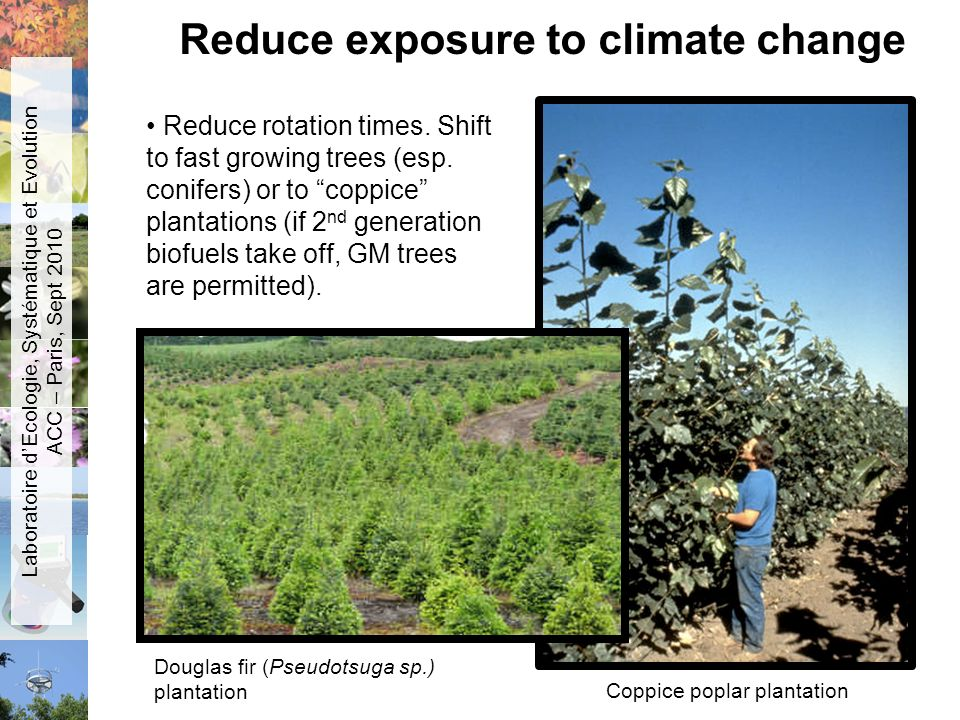 Reduce exposure to climate change Reduce rotation times. Shift to fast growing trees (esp. conifers) or to coppice plantations (if 2 nd generation bio
