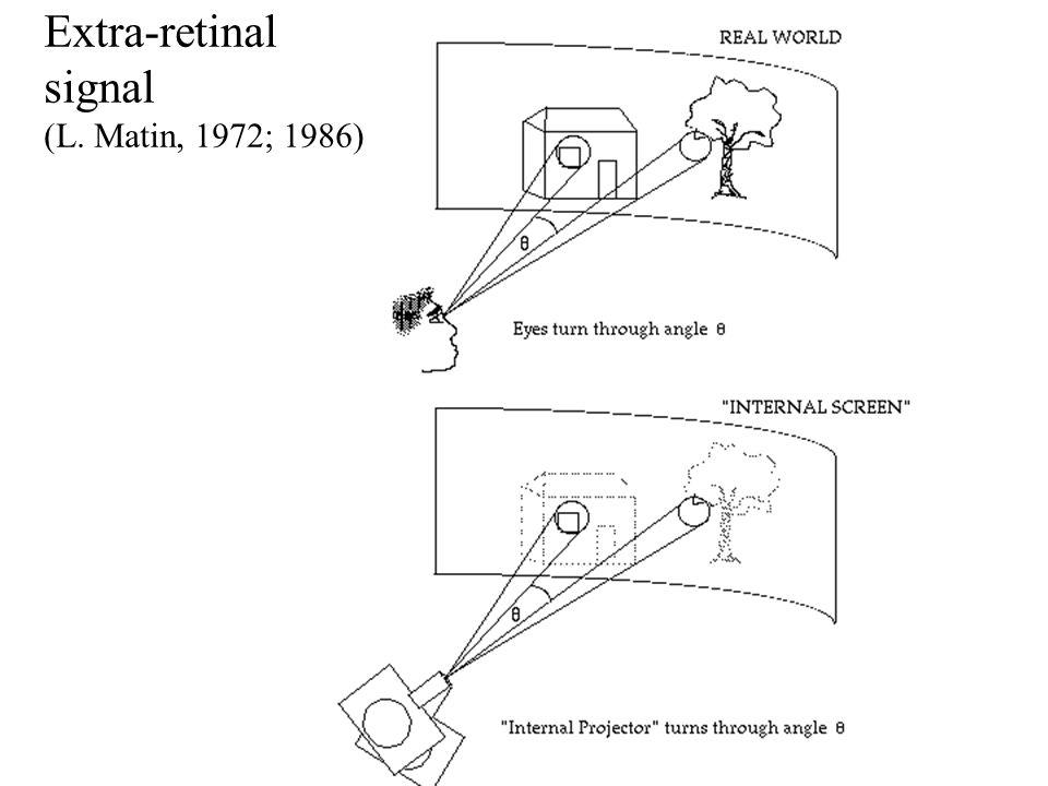 Extra-retinal signal (L. Matin, 1972; 1986)