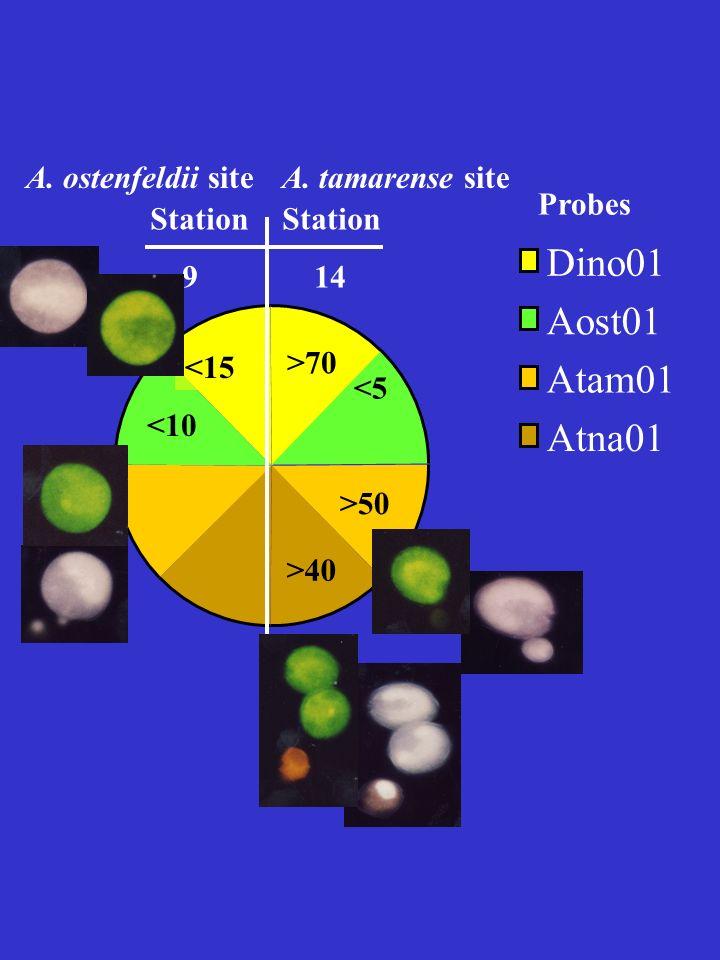 <15 <10 >70 >50 >40 <5 Dino01 Aost01 Atam01 Atna01 Station 9 Station 14 Probes A. tamarense siteA. ostenfeldii site