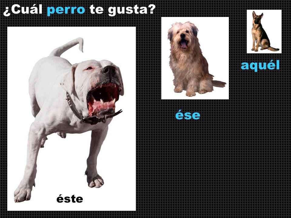¿Cuál perro te gusta? ése éste aquél