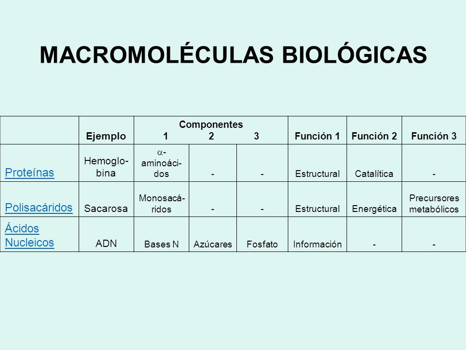 MACROMOLÉCULAS BIOLÓGICAS Ejemplo Componentes 1 2 3Función 1Función 2Función 3 Proteínas Hemoglo- bina - aminoáci- dos--EstructuralCatalítica- Polisac