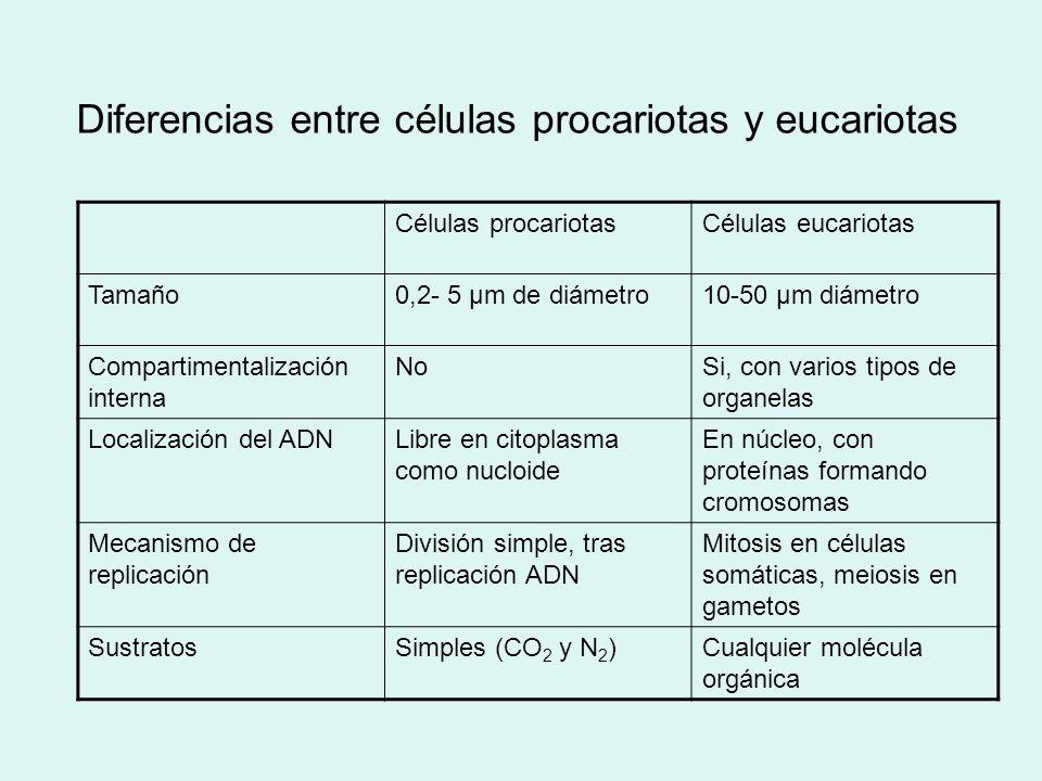 Diferencias entre células procariotas y eucariotas Células procariotasCélulas eucariotas Tamaño0,2- 5 µm de diámetro10-50 µm diámetro Compartimentaliz