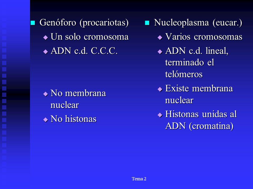 Tema 2 Genóforo (procariotas) Genóforo (procariotas) Un solo cromosoma Un solo cromosoma ADN c.d. C.C.C. ADN c.d. C.C.C. No membrana nuclear No membra