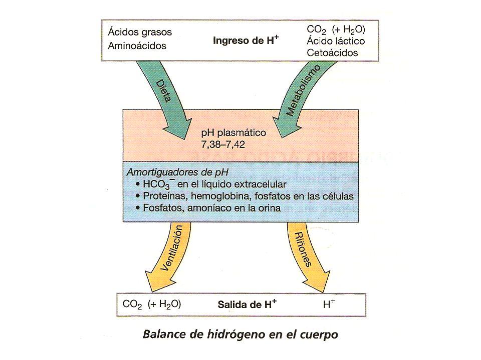 Iónico Difusible Activo Albúmina Ligado Inactivo 4 5 ASTENIA TETANIA