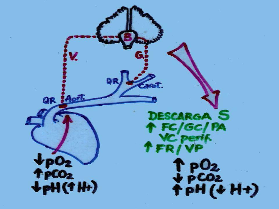 pHpCO 2 HCO 3 - Respuesta Compensatoria Acidosis Metabólica o Alcalosis Respiratoria Acidosis Respiratoria o Alcalosis Metabólica o Acidosis Respiratoria Alcalosis Respiratoria o Acidosis Metabólica
