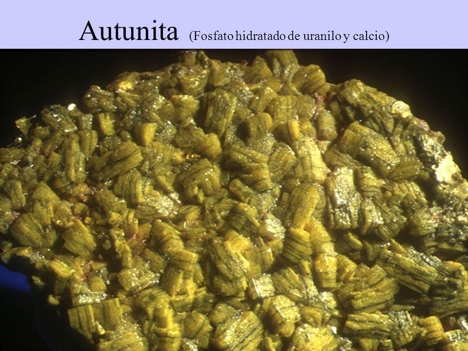 Autunita (Fosfato hidratado de uranilo y calcio)