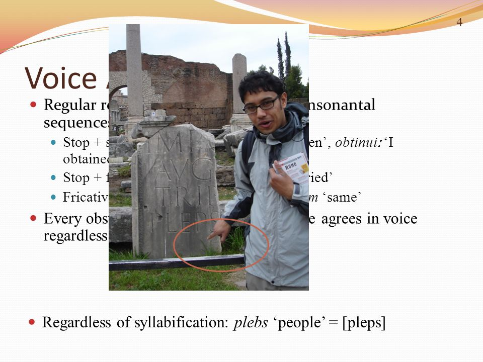 Regardless of syllabification: plebs people = [pleps] Voice Assimilation Regular regressive assimilation in biconsonantal sequences (C 1 C 2 ) Stop +