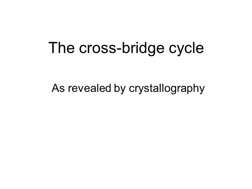 The cross-bridge cycle As revealed by crystallography