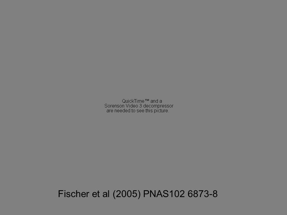 Fischer et al (2005) PNAS102 6873-8