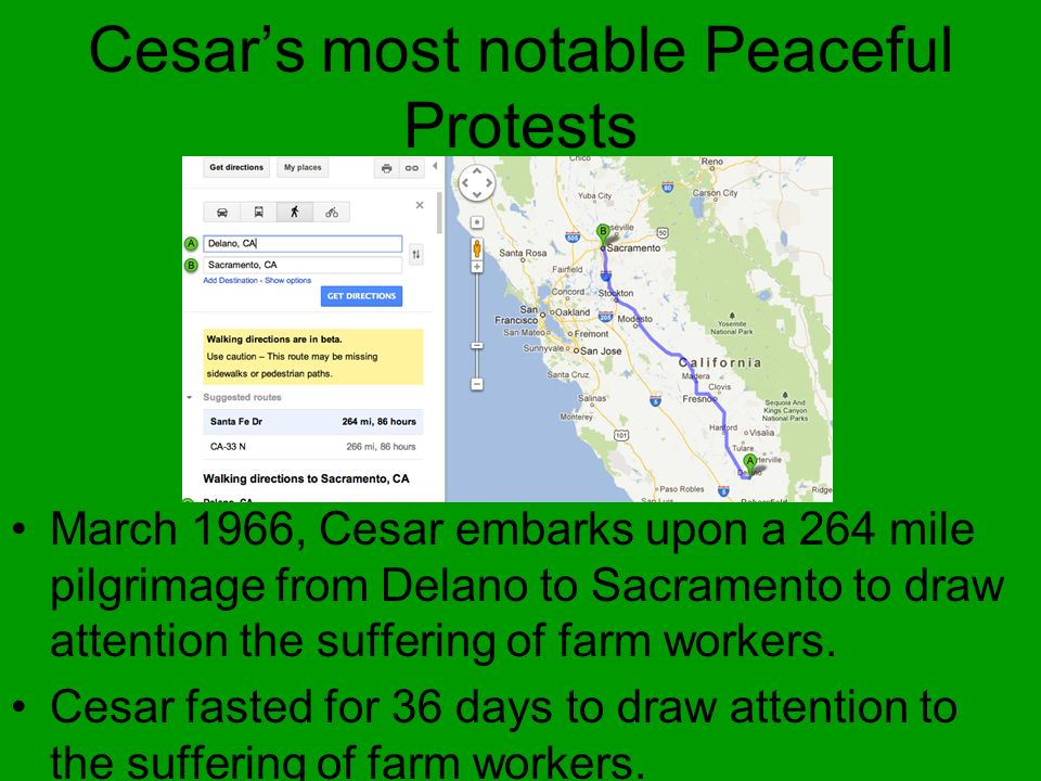 Cesars most notable Peaceful Protests March 1966, Cesar embarks upon a 264 mile pilgrimage from Delano to Sacramento to draw attention the suffering o