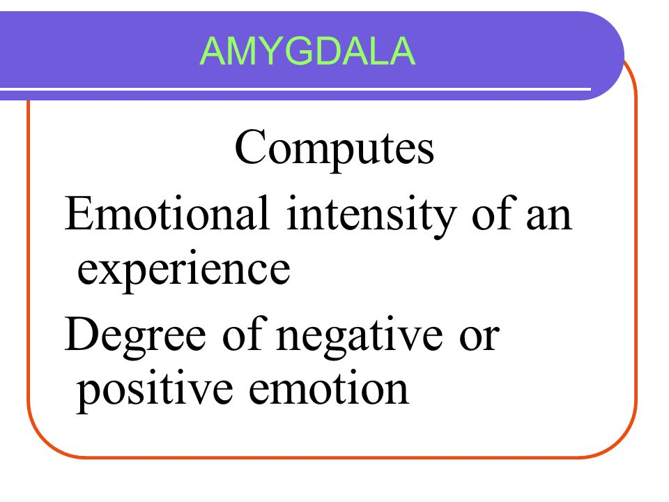 AMYGDALA Computes Emotional intensity of an experience Degree of negative or positive emotion