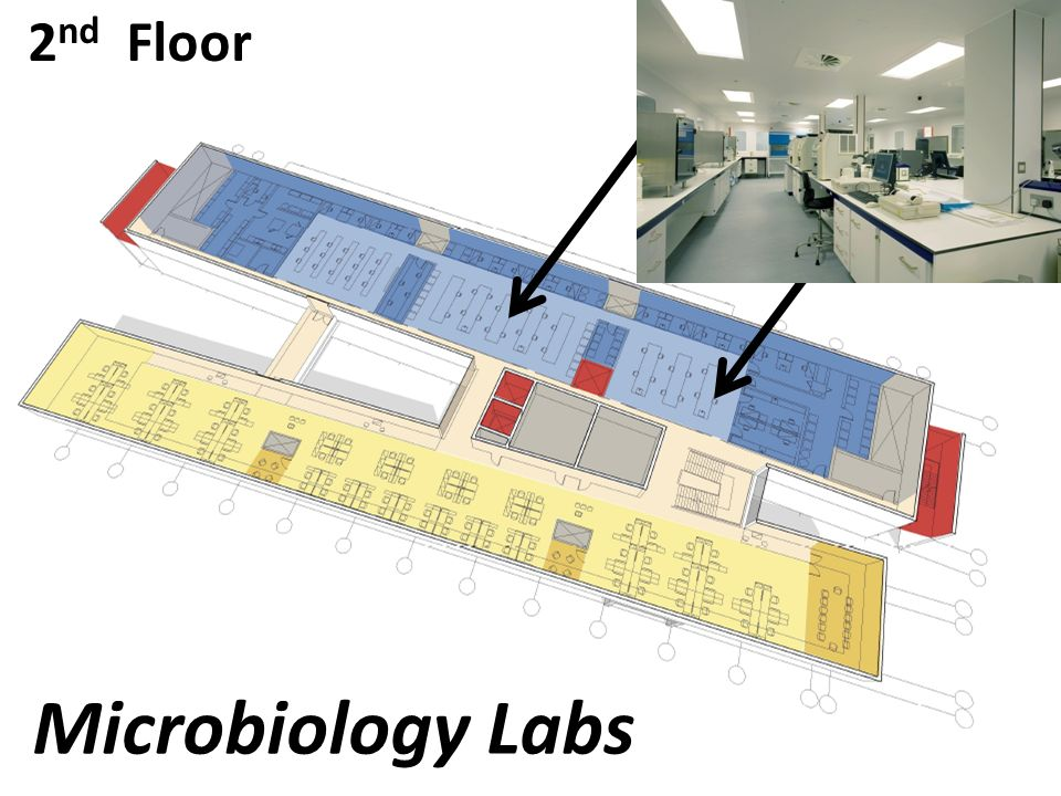 2 nd Floor Microbiology Labs