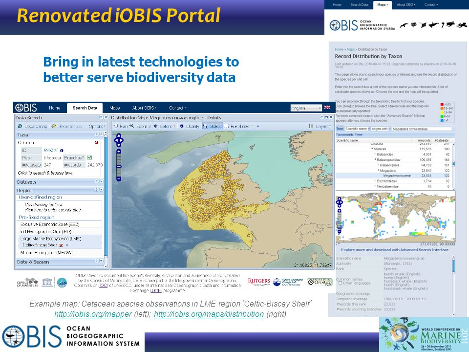 Renovated iOBIS Portal Bring in latest technologies to better serve biodiversity data Example map: Cetacean species observations in LME region Celtic-