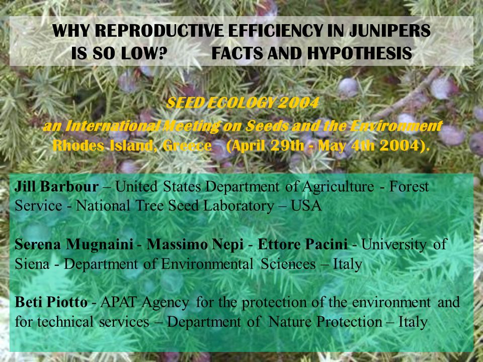 WHY REPRODUCTIVE EFFICIENCY IN JUNIPERS IS SO LOW? FACTS AND HYPOTHESIS SEED ECOLOGY 2004 an International Meeting on Seeds and the Environment Rhodes