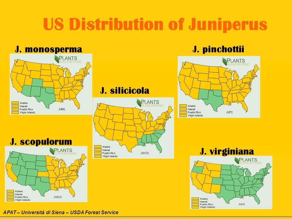 US Distribution of Juniperus J. pinchottii J. virginiana J. monosperma J. scopulorum J. silicicola APAT – Università di Siena – USDA Forest Service