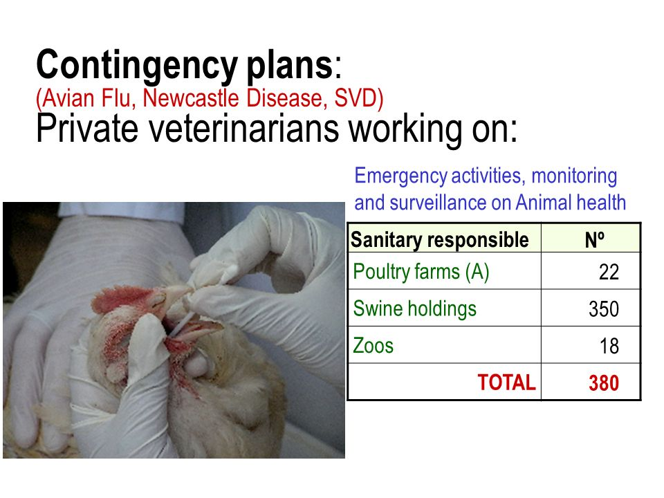 Contingency plans : (Avian Flu, Newcastle Disease, SVD) Private veterinarians working on: Sanitary responsible Nº Poultry farms (A)22 Swine holdings35