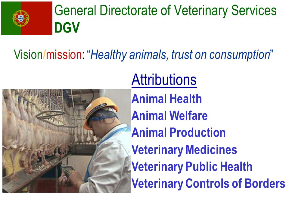 General Directorate of Veterinary Services DGV Attributions Animal Health Animal Welfare Animal Production Veterinary Medicines Veterinary Public Heal