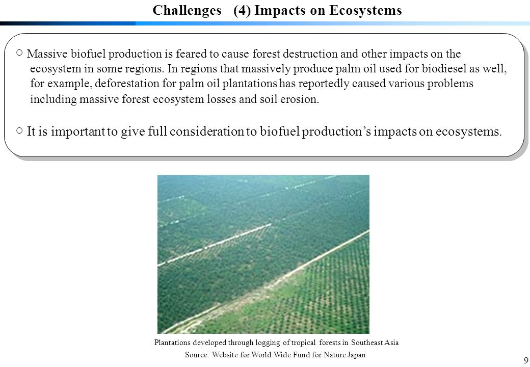9 Massive biofuel production is feared to cause forest destruction and other impacts on the ecosystem in some regions.