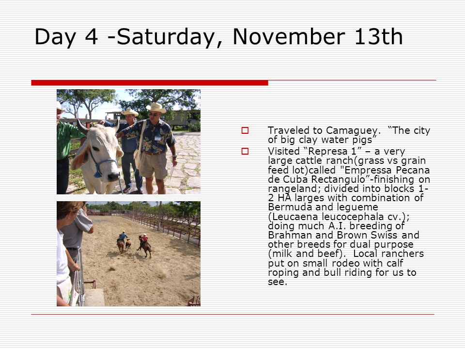 Day 4 -Saturday, November 13th Traveled to Camaguey. The city of big clay water pigs Visited Represa 1 – a very large cattle ranch(grass vs grain feed