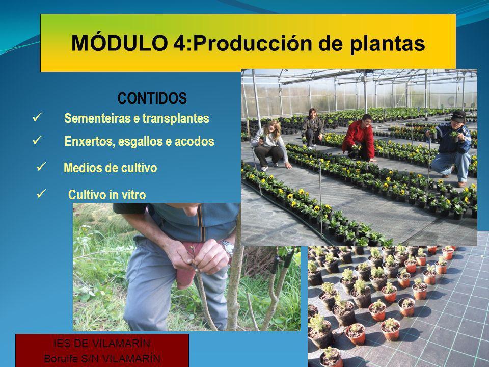 CONTIDOS Sementeiras e transplantes Enxertos, esgallos e acodos Cultivo in vitro IES DE VILAMARÍN Borulfe S/N VILAMARÍN MÓDULO 4:Producción de plantas Medios de cultivo