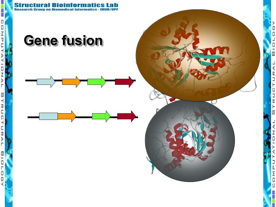 Gene fusion