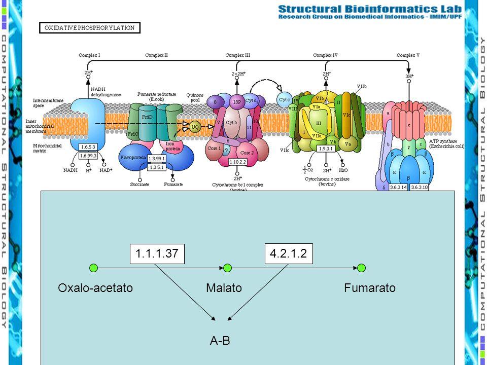 1.1.1.37 4.2.1.2 Oxalo-acetatoMalatoFumarato A-B
