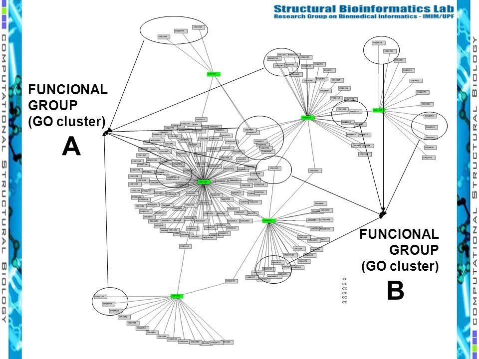 FUNCIONAL GROUP (GO cluster) A FUNCIONAL GROUP (GO cluster) B