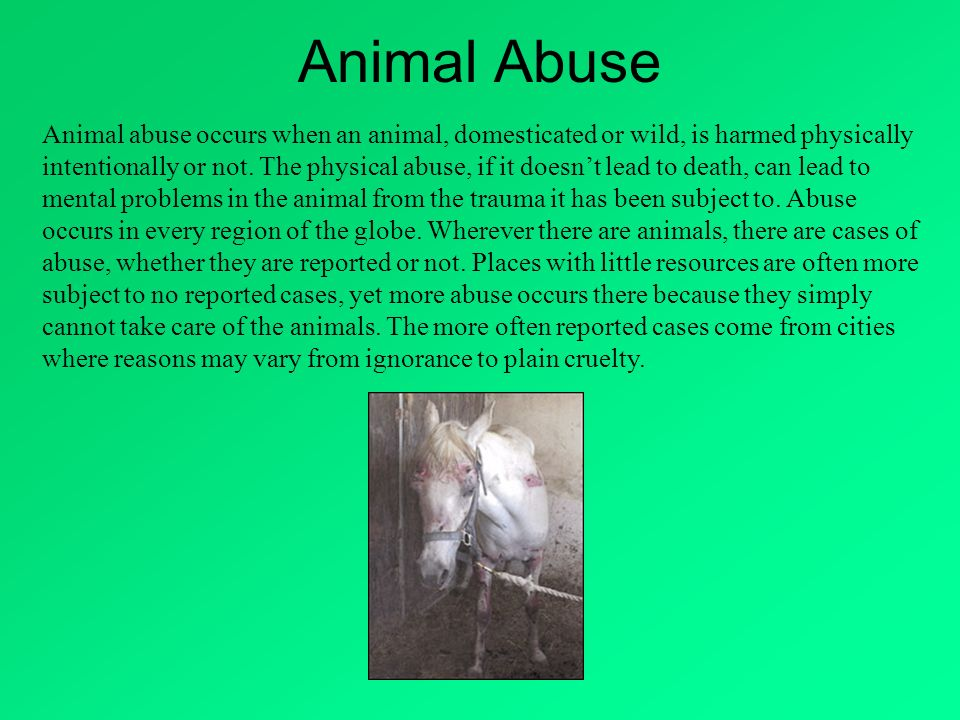 Animal abuse occurs when an animal, domesticated or wild, is harmed physically intentionally or not. The physical abuse, if it doesnt lead to death, c