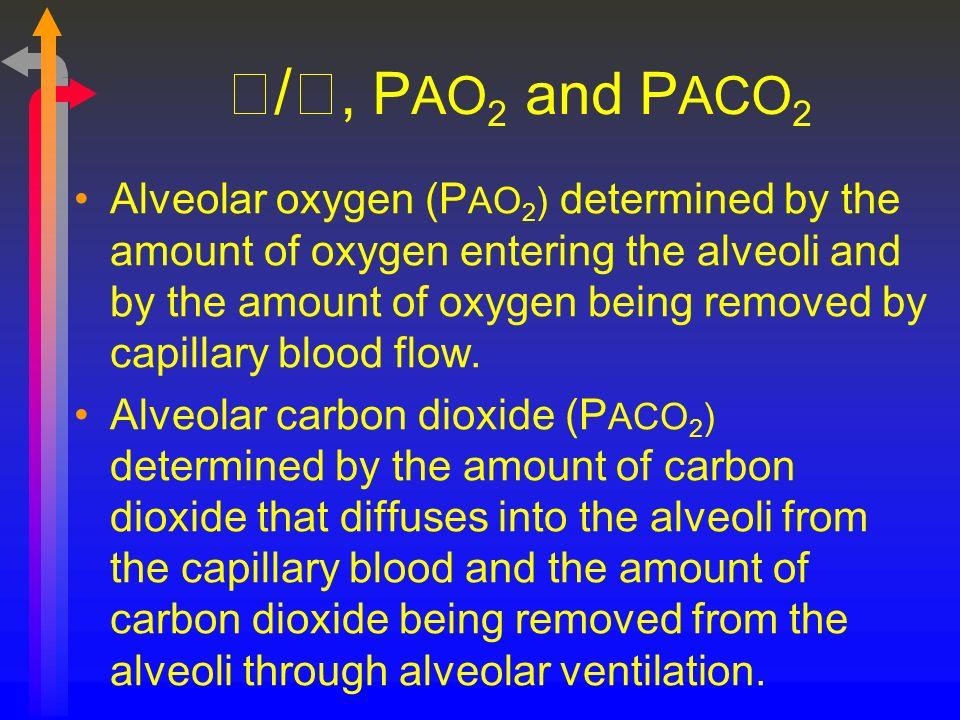 /, P AO 2 and P ACO 2 Alveolar oxygen (P AO 2 ) determined by the amount of oxygen entering the alveoli and by the amount of oxygen being removed by c
