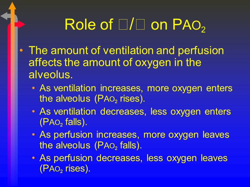 Role of / on P A O 2 The amount of ventilation and perfusion affects the amount of oxygen in the alveolus. As ventilation increases, more oxygen enter