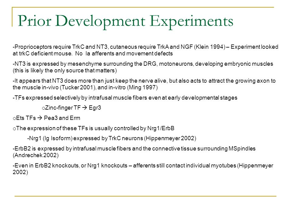 Prior Development Experiments - Proprioceptors require TrkC and NT3, cutaneous require TrkA and NGF (Klein 1994) – Experiment looked at trkC deficient